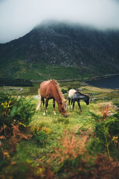 Wildlife in Sowdonia National Park Snowdonia Britain Mammal Animal Animal Themes Domestic Animals Livestock Plant Vertebrate Mountain Field Land Domestic Landscape Nature Environment Grazing Agriculture Group Of Animals Pets Beauty In Nature Sky