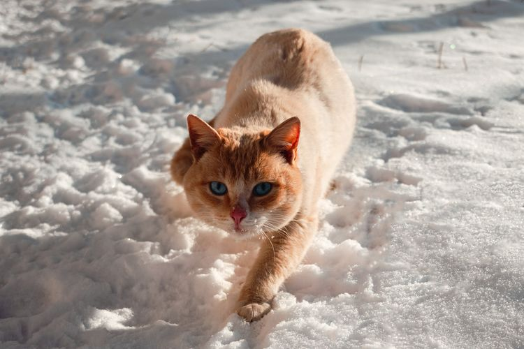 Portrait of a cat in snow