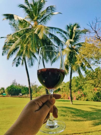 Human Hand Wineglass Wine Human Body Part Alcohol Drink Holding Food And Drink Personal Perspective Real People Drinking Glass Tree One Person Red Wine Refreshment Lifestyles Focus On Foreground Outdoors Day