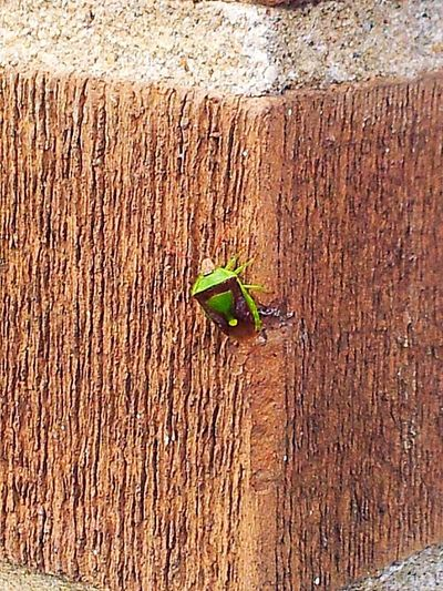 Abugslife Animals In The Wild One Animal Animal Wildlife No People Textured  Outdoors Nature