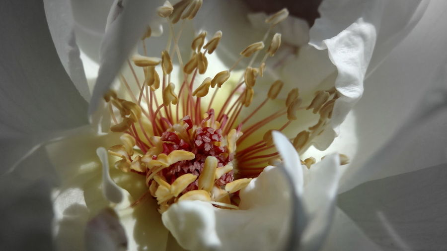 Macro close-up of white flower