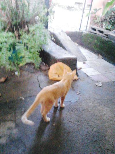 little cat First Eyeem Photo