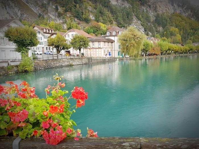 Sueño Water Cristaline Flowers Dreamplaces Beautiful Nature Lake Bridge