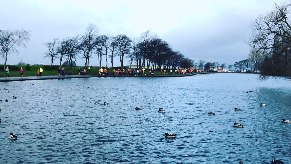 Parkrun Pontefract Parkrun Water Sky Bird Animal Themes Nature Tree Waterfront Large Group Of Animals Animal Wildlife Outdoors No People Bare Tree River Beauty In Nature Day Scenics Floating On Water Swan