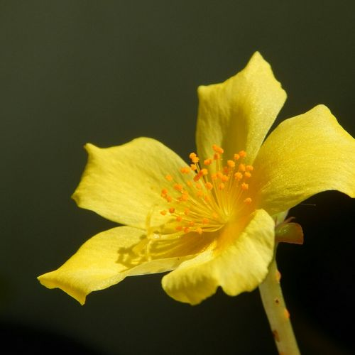 NoFilterNoEdition Lovely Flower Yellow Flower Yellow Green Nikon Nikontop L820 First Eyeem Photo