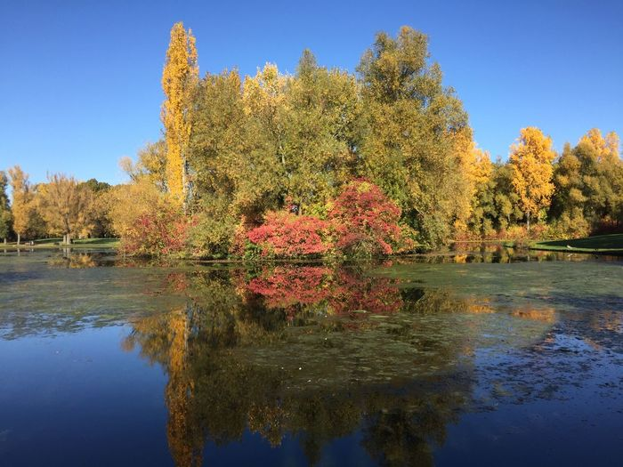 Water Tree Plant Autumn Reflection Change Lake Beauty In Nature Nature Tranquility Tranquil Scene Scenics - Nature Day Growth Waterfront No People Sky Clear Sky Orange Color Outdoors Fall Natural Condition