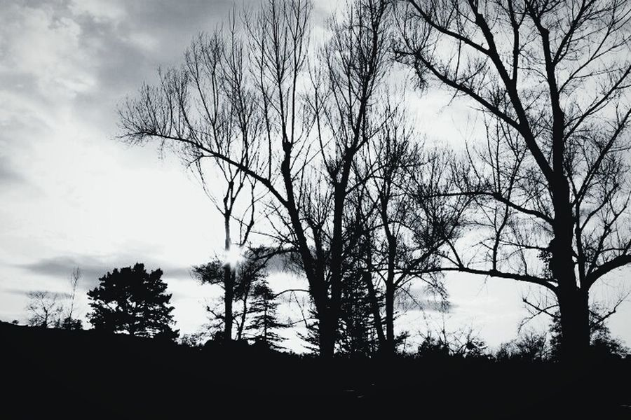 Dead Trees February Scenery Shots Spooky Trees First Eyeem Photo B&wphotography Done By Me