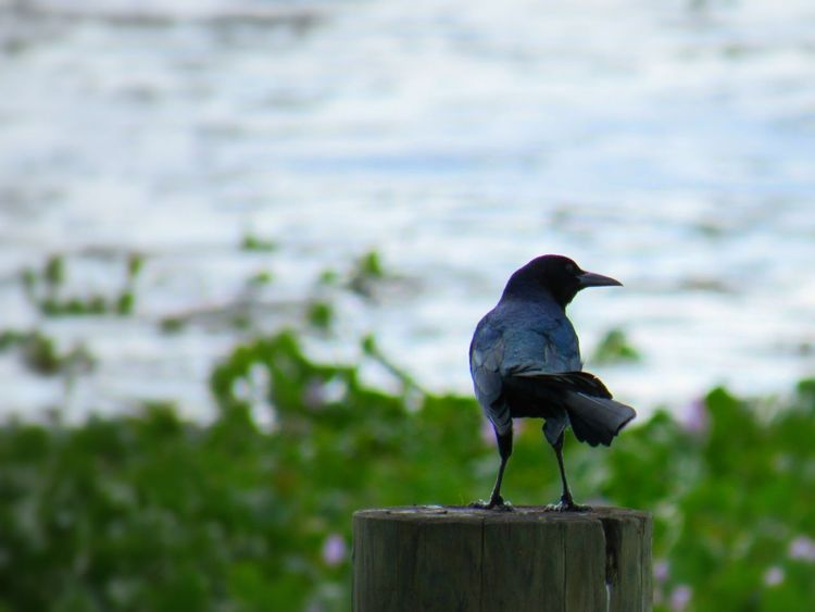 Animals Birds Crow Nature River Dockside Still Life Photography