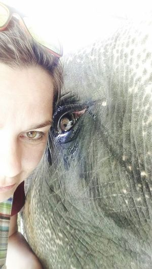 An Eye For Travel Human Eye Portrait Looking At Camera One Person Close-up Human Face Young Women Selphie Elephant Animal Themes Animal Head  Animal Photography Animal Eye Elephant Nature Park Elephant Skin Elephant Eye An Eye For Travel An Eye For Travel
