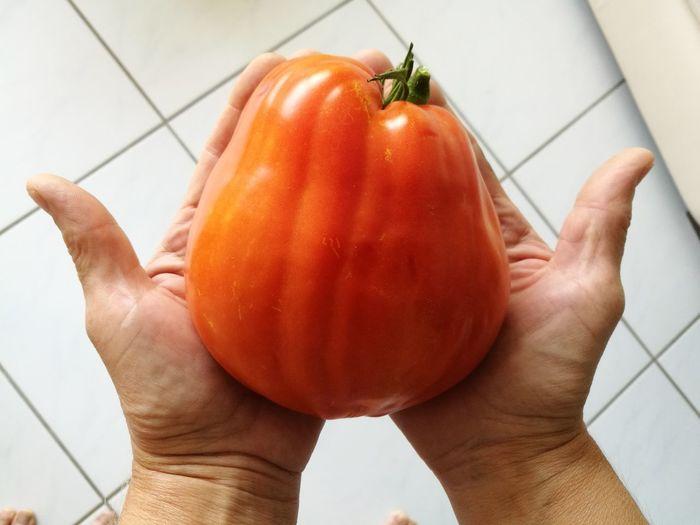monster tomatoe
