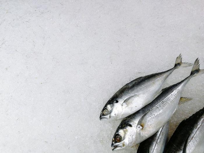 Close-up of fish on snow