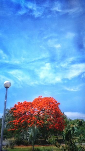 ©kavita_choudhary_photography Sky Blue Growth Cloud - Sky No People Nature Outdoors Red Day Beauty In Nature Flower Nature Plant Photographer Photography The Great Outdoors - 2017 EyeEm Awards The Portraitist - 2017 EyeEm Awards Illuminated Tranquil Scene Close-up Tranquility Mobileclick Abstract Iftreescouldspeak Pattern
