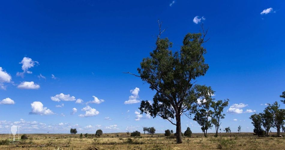 For Sale Cattle Ranch Cattle Station Australian Outback Australian Landscape Australia Nature Beautiful Showing Imperfection Emerald Qld Outdoors The Great Outdoors With Adobe