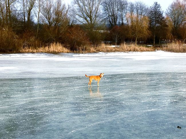 Animal Themes One Animal Snow Winter Mammal Cold Temperature Domestic Animals Dog Tree Nature Pets Outdoors Full Length No People Day Beauty In Nature Hund Lake See Bodensee Konstanz Eis Ice Iceskating Schlittschuhlaufen