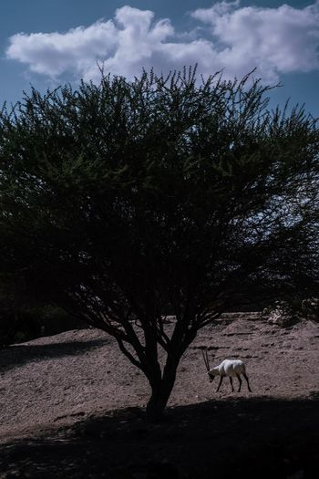 View of horse on tree