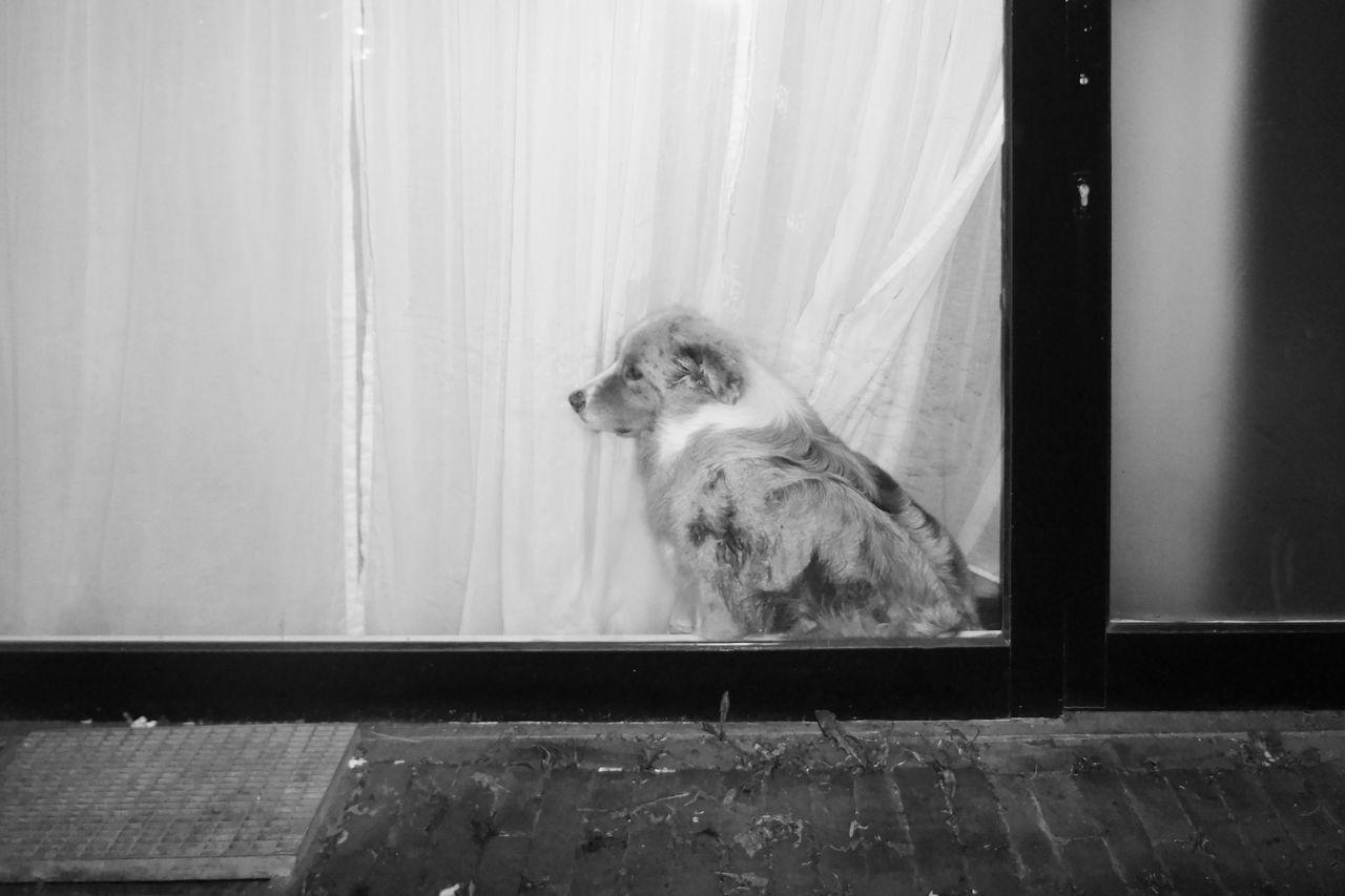 one animal, domestic animals, pets, dog, animal themes