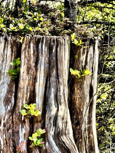 Bark Close-up Day Fragility Growth Leaf Nature No People Outdoors Plant Tree Tree Trunk Wood - Material
