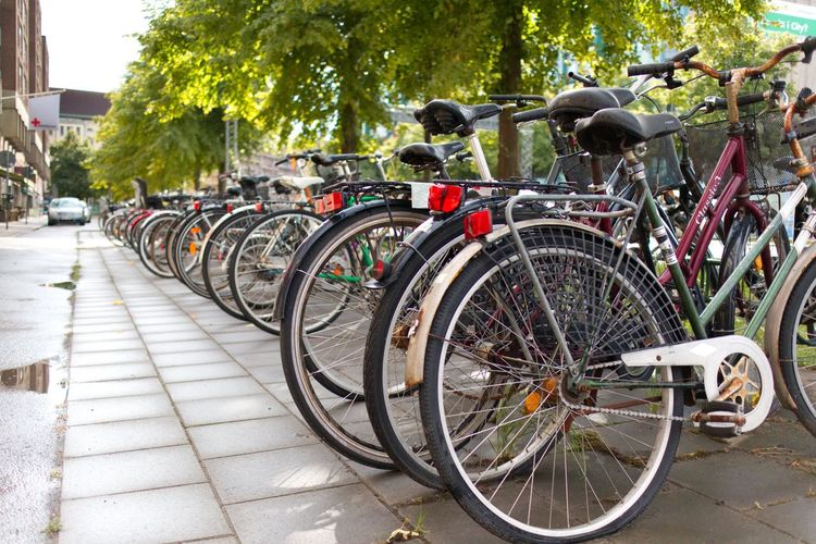 Transportation Bicycle Land Vehicle Mode Of Transportation Plant Tree Stationary City Street Bicycle Rack In A Row Wheel