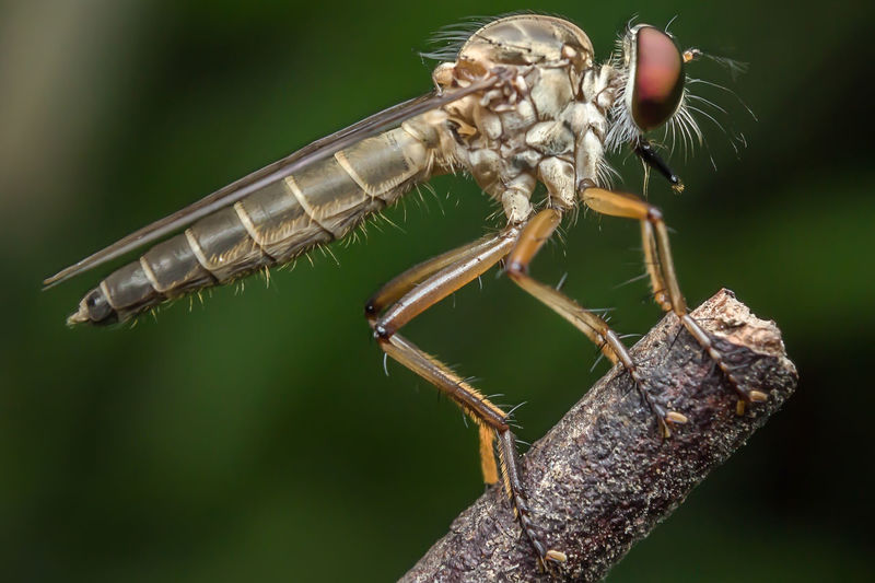 Close-up of damselfly on stick