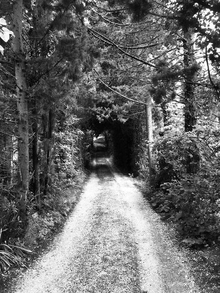 🦔🌳🐿campagne Nature Plant Threes Chemin Vacances Route Blackandwhite Photography Black And White Photography monochrome photography Monochrome Tree Plant Direction The Way Forward Growth Nature Transportation Day No People Diminishing Perspective Outdoors Road Forest Sunlight Land Footpath Tranquility Beauty In Nature City vanishing point