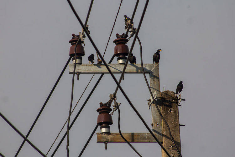 Animal Bird Cable Day Electricity  Group Of Animals Nature Power Supply Sky Vertebrate