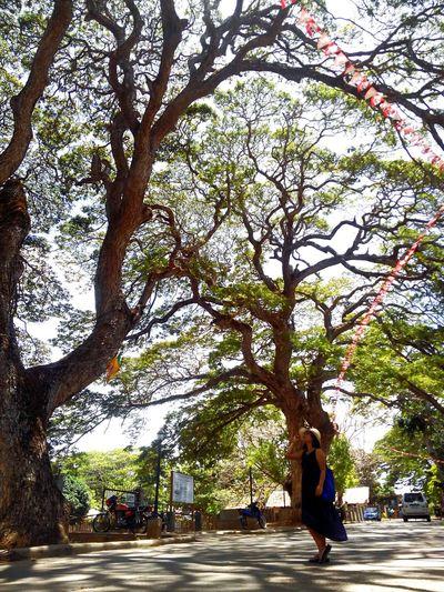 Full length of tree on road in city