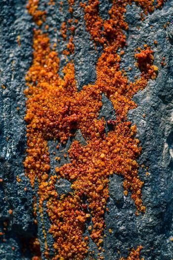 Full frame shot of lichen on rusty metal
