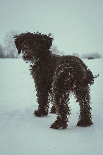 AnimaLs <3 Dog Chapa Dog Love I Love My Pet My Dog <3