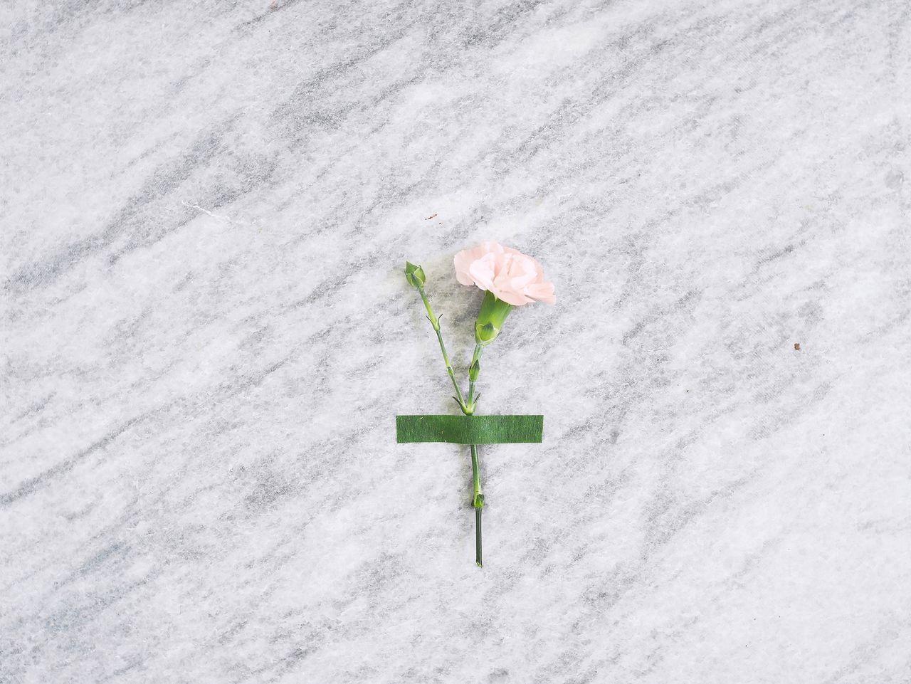 Chişinău,  Day,  Flower,  Flower Head,  Fragility