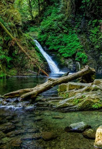 Waterfall at Goldstream Water Forest Tree Plant Motion Flowing Water Scenics - Nature Beauty In Nature Land Nature Waterfall Rock Long Exposure Solid Rock - Object Blurred Motion No People Day River Flowing Stream - Flowing Water Outdoors Rainforest Falling Water Power In Nature