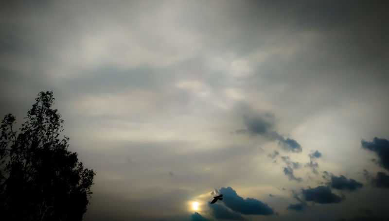 One of the shades of sky.. Captured By Oneplus X Oneplus X SkyOnePlusX Oneplus Sunset Evening Bird Tree Clouds Grey Grey Sky Noiseless Wallpaper Full Hd 16:9 Tranquility Tranquil Scene Peaceful The Great Outdoors - 2017 EyeEm Awards Place Of Heart