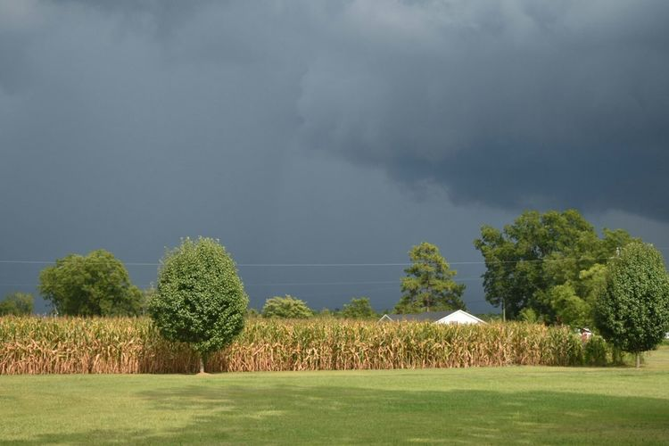 North Carolina Storm Clouds Stormy Sky Stormy Weather Cornfield Country Life