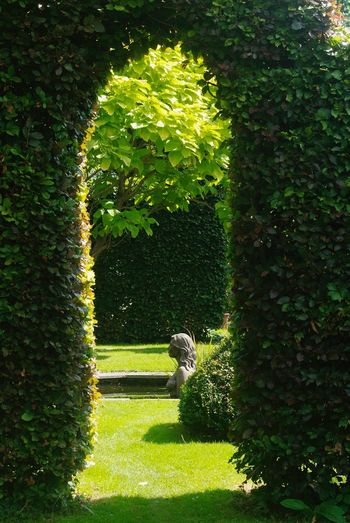 Glimpses through a leafy archway Green Color Growth Nature Day Plant Outdoors No People Tree Beauty In Nature Grass Leaves Lushness Hedge Beautiful Garden Kent England