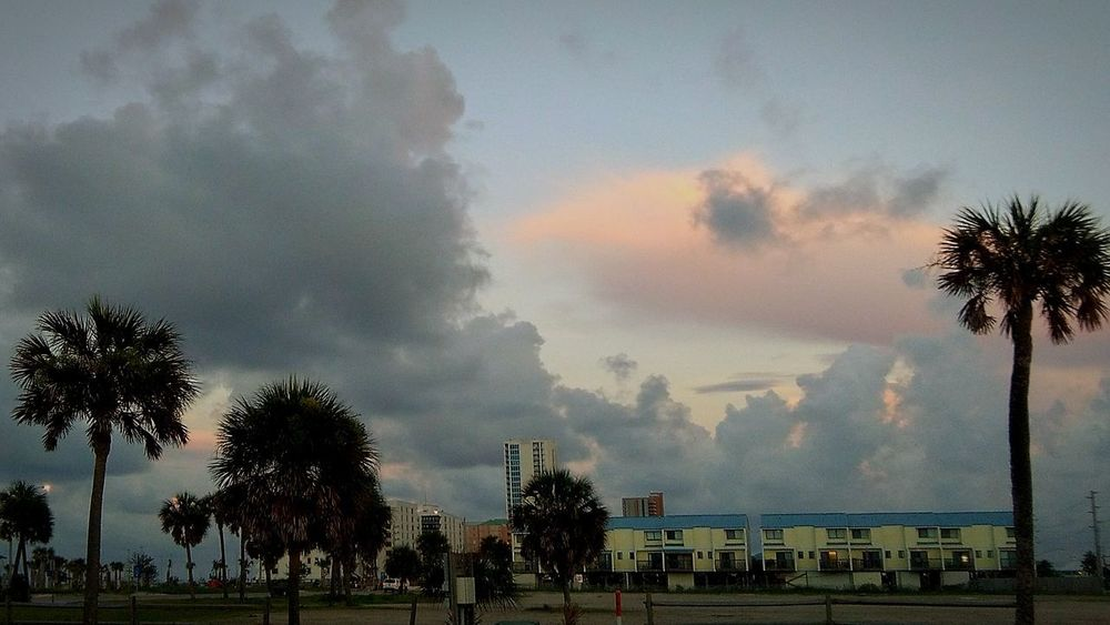 Outdoors Nature Cloud - Sky Palm Tree Beachphotography Beach Front Ocean Photography EyeEm Nature Lover Outdoor Photography Travel Destinations Tranquility Beauty In Nature EyeEm Selects Landscape Vacations Gulf Shores, AL