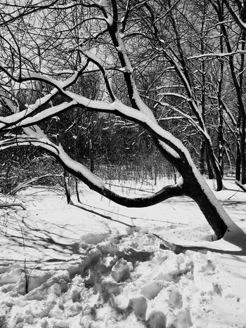 Black And White Winter Snow Bare Tree Cold Temperature Tree Nature Tranquility Branch Beauty In Nature Weather Outdoors Tranquil Scene Frozen Day Scenics No People Landscape Water Sky