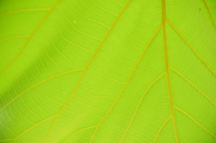 Leaf Green Color Nature Backgrounds Freshness Close-up Day Growth No People Outdoors Full Frame Fragility Plant Beauty In Nature