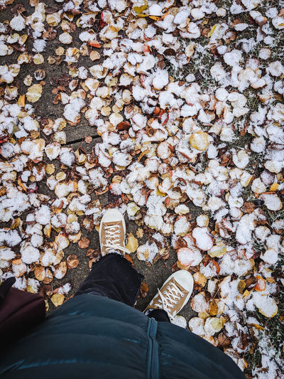 Woman looking down at autumn leaves covered with snow. Shoe Standing Real People Lifestyles High Angle View Outdoors Leaves Jeans Winter Autumn colors Snow First Snow Puffy Coat Coat I Have This Thing With Floors Lifestyle Blogger Fashion Blogger Fashion Photography Plus Size Model Plus Size Sneakers Looking Down City Sidewalk Walking
