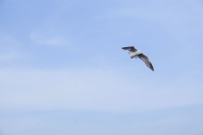 a seagull in