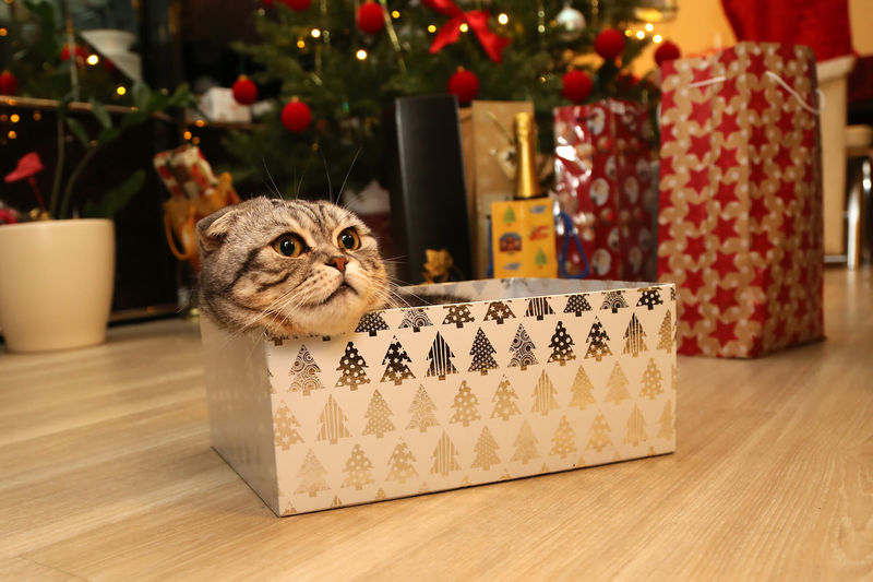 Cat sitting in gift box on floor during christmas