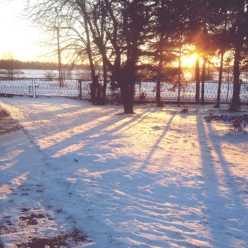 Winter Cold Temperature Snow Tree Sunlight Nature Tranquil Scene Sunbeam Sunset Field Sun Outdoors Covering Bare Tree Scenics Tranquility No People Day