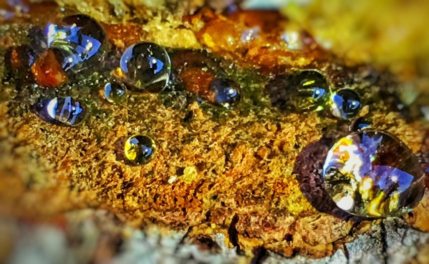 Tree Trunk Resin Resin Jewellery Resindrop Close-up Selective Focus No People Nature Rock Solid Multi Colored