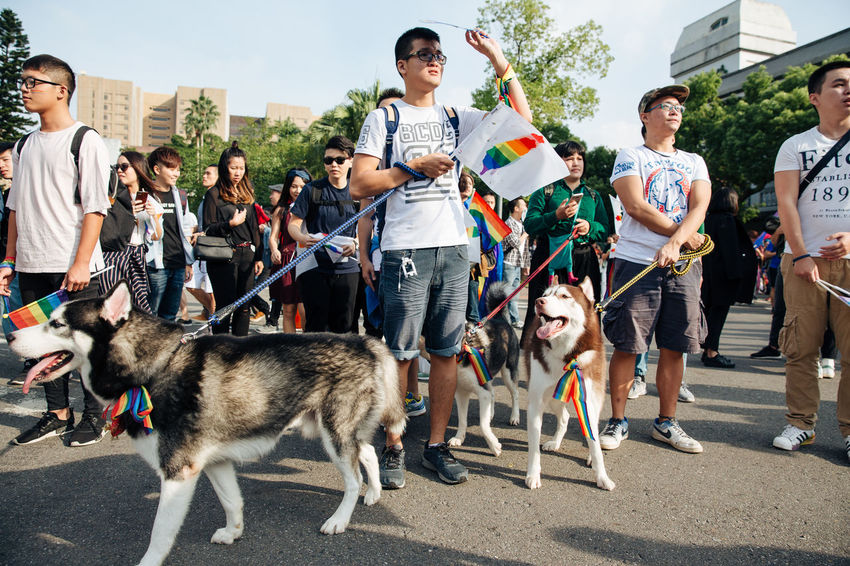 Taipei, Taiwan - Oct 28, 2017: Hundreds of thousands came out on streets of Taipei for the 15th Taiwan Pride Parade. The parade started marching from Ketagalan Boulevard to three different avenues and made Taipei even more colorful with all shades of rainbow. This year's goal is to promote inclusive education as it would lead to better acceptance. Taiwan is about to be the first in Asia to officially legalize 'equal marriage'. Gay Pride LGBT Rainbows LGBT Rainbow Rainbowflag Siberian Husky Taipei Pride Taiwanese Dog Gay Pride Parade Gaypride Lgbt Flag Lgbt Pride Lgbtpride Loveislove Lovewins Pride2017 Prideparade Rainbow Taiwan Pride Taiwanpride Taiwanpride2017 This Is Queer This Is Family Love Is Love
