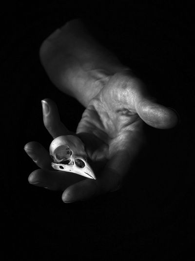 no....I'm fine, really..... Details Of Nature Pica Pica Magpie Bird Skull Life Black And White Photography Black And White Chiaroscuro  Skull Bone  Human Hand Hand Human Body Part Indoors  Close-up Black Background Holding A New Perspective On Life A New Perspective On Life
