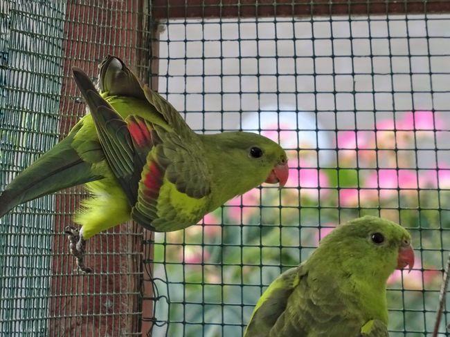 Bird Photography Birds Bird Birds Of EyeEm  Animal Photography Photoshoot Sony Dsc Hx60v Taking Photos Photo♡ In De Buurt