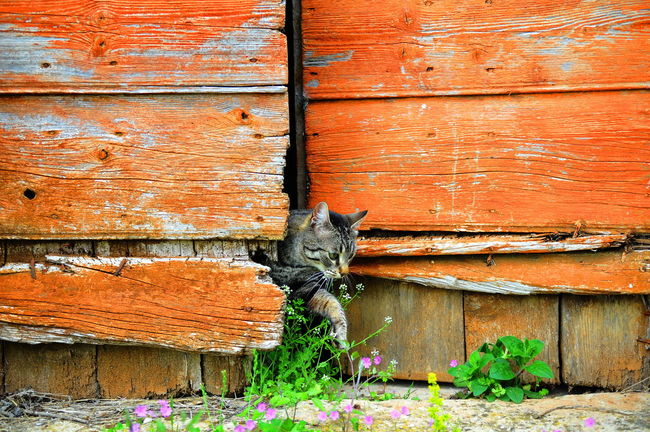 Cat No People Day Outdoors Orange Color Nature Close-up Architecture Old Wildlife & Nature Contrast Daytime Photography Retro Light And Shadow Outdoor Photography Pets Old Buildings Animal Themes Animals In The Wild Cool Colors Design Motion Close Up Herzegovina Croatia