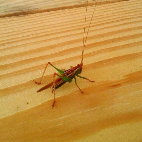 Bugs Wierd Grasshopper Closeup Taking Photos Random :)