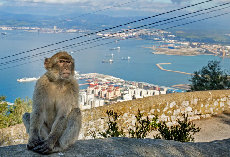 Macaque sitting on rock against town and sea