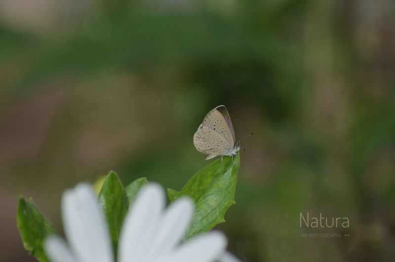 Natura Italia Italy Nature Eyem Gallery Eyem Best Shots Butterfly - Insect Nature