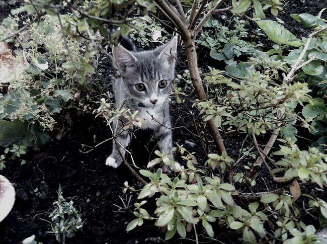 Nature Animal Cat