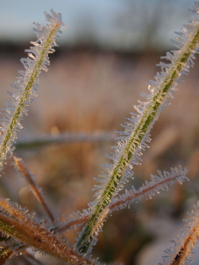 Atumn Colors Autumn Freshness Frost Grass Low Angle View Winter Beauty In Nature Close-up Cold Temperature Day Focus On Foreground Fragility Freshness Green Color Growth Leaf Nature No People Outdoors Plant Snow Winter